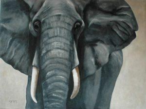 11 Eléphant