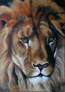 17 Lion