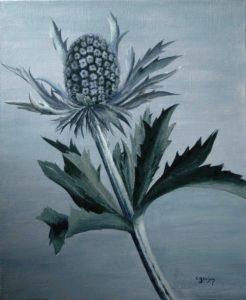 24 fleur de chardon