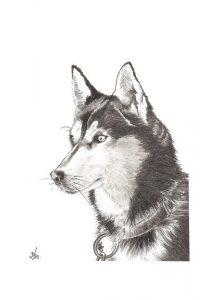 Husky - © B. Vintousky (3)