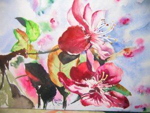 cerisier a fleurs - aquarelle